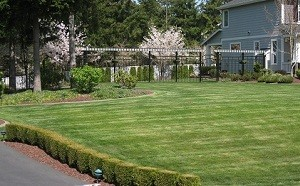 Spring-Yard-Clean-Up-Black-Diamond