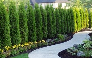 Tree-Care-Sammamish