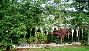 tree-care-redmond-wa