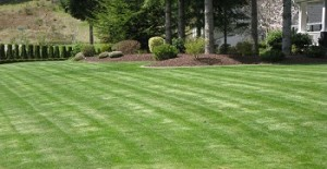 artificial-grass-snoqualmie-wa