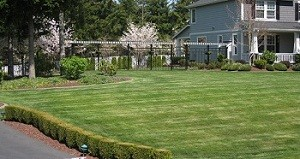 yard-clean-up-enumclaw-wa