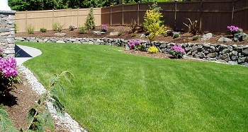 Overseeding-Lawn-Maple-Valley-WA